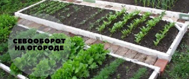 севооборот на огороде