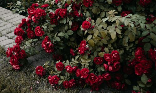 выращивание цветов в открытом грунте для начинающих