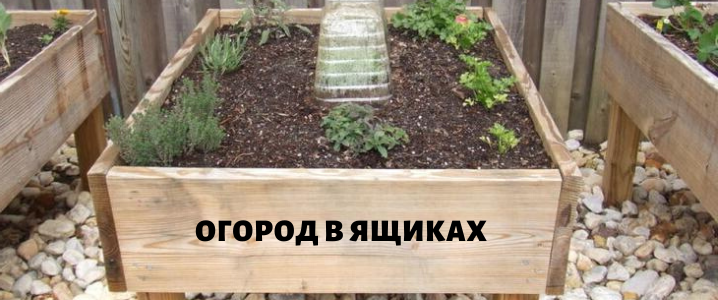 огород в ящиках